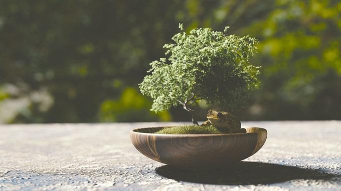 Bonsai-drvo-sadnice-sadnja-i-uzgoj.jpg